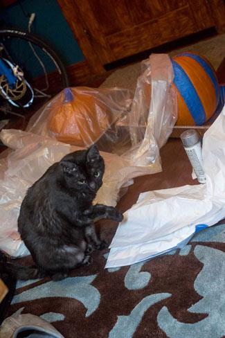 halloween_2013_pumpkins-4664
